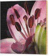 Asiatic Lily Named Vermeer Wood Print