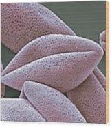 Asparagus Pollen Grains, Sem Wood Print by Steve Gschmeissner