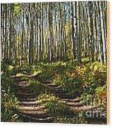Aspen Dreamland Wood Print