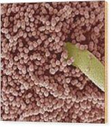 Aspergillus Fungus Spores, Sem Wood Print