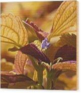 Autumn Coleus Wood Print