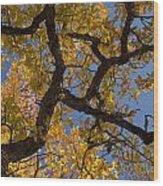 autumn Garry Oak Quercus garryana Klickitat County WA USA Wood Print