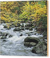 Autumn Stream 3 Wood Print