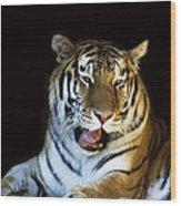 Awaking Tiger Wood Print