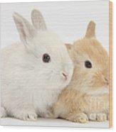 Baby Lop Rabbits Wood Print