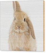 Baby Sandy Lop Rabbit Wood Print