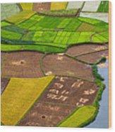 Bac Son Rice Field Wood Print