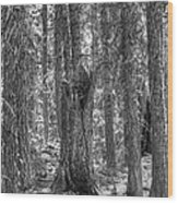 Back To Nature Wood Print
