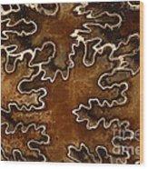 Baculites Fossil Wood Print