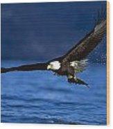Bald Eagle Haliaeetus Leucocephalus Wood Print