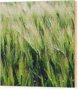 Barley, Co Down Wood Print