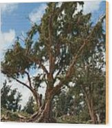 Beach Pine Wood Print