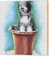 Beardie In A Pot Wood Print