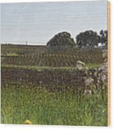 Beautiful California Vineyard Framed With Flowers Wood Print