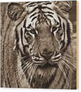 Bengal Tiger On The Prowl Wood Print