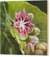 Berry Blossom Wood Print