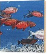 Bigeye Fish Wood Print