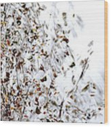 Birch Twigs In Autumn - Multiple Layers Wood Print