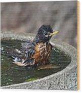 Bird Bath Fun Time Wood Print