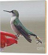 Birds And Bee's Wood Print
