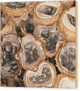 Birds Nest Fungus Wood Print