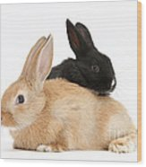 Black And Sandy Rabbits Wood Print