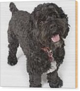 Black Bichon-cocker Spaniel Dog Wood Print