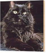 Black Persian Cat Wood Print