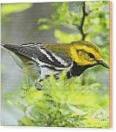 Black-throated Green Warbler Wood Print