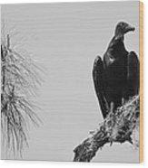 Black Vulture Wood Print