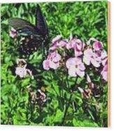 Blackie Wood Print