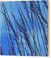 Blue Grass  Wood Print