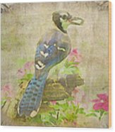 Blue Jay With Texture II Wood Print