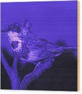 Bluethroat Wood Print by Volker Steger
