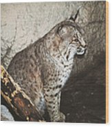 Bobcat Wood Print by DiDi Higginbotham