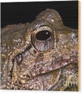 Bobs Robber Frog Wood Print