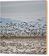 Bombay Beach Birds Wood Print