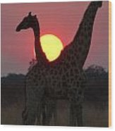 Botswana Sunset Wood Print