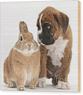 Boxer Puppy And Netherland-cross Rabbit Wood Print