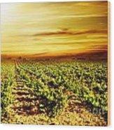 Bright Sunset At Vineyard Wood Print