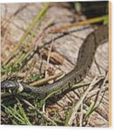 British Grass Snake Wood Print