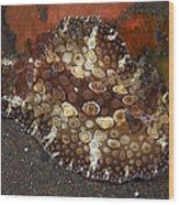 Brown And White Discodoris Nudibranch Wood Print
