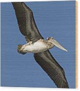 Brown Pelican Juvenile Flying Santa Wood Print