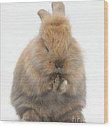 Bunny Grooming Wood Print