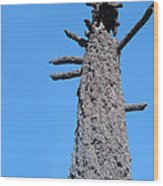 Burned Trees 3 Wood Print