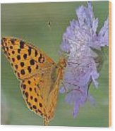 Butterfly On Right Position Wood Print