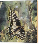 Butterfly On Yellow Flowers Wood Print
