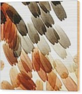 Butterfly Scales, Light Micrograph Wood Print