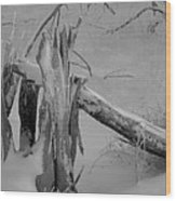 Bw Snowy Stump Wood Print