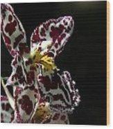C Ribet Orchids Wood Print